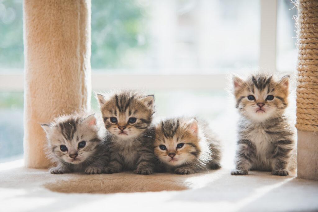 4 cute kittens sat in front of a window between 2 scratch posts.