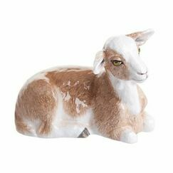 Brown/White Goat