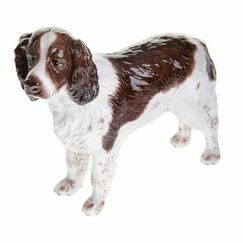 Liver/White English Springer Spaniel