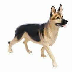 Connoisseur German Shepherd Dog