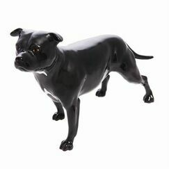 Connoisseur Staffordshire Bull Terrier Dog